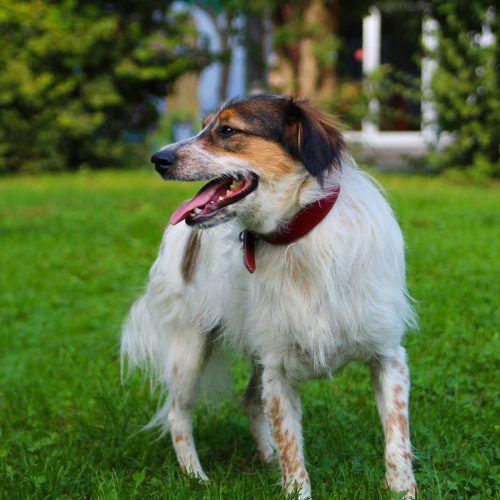 Die Hunde Frodo und Alvin (unten) sowie Kater Burli-Gato brauchen Menschen, die ihnen ein liebevolles Daheim geben. TSH