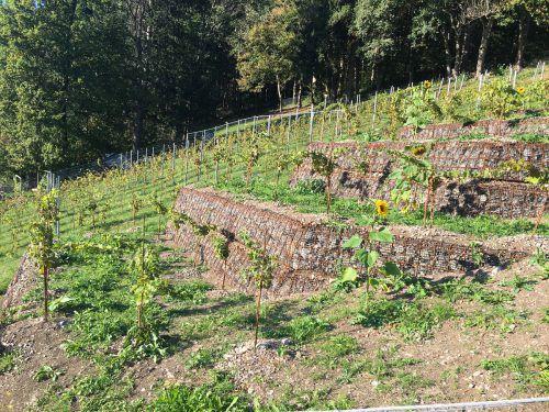 Die Terrassen im Weingut der Familie Tschann in Bludenz-Rungelin sollen rasch zurückgebaut werden.