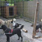 Tierschutzheim sucht fleißige Sammler