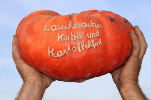Ein Hoch auf den Kürbis beim traditionellen Kürbis- und Kartoffelfest.