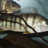 29 Fischarten
