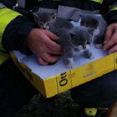 Kätzchen gerettet