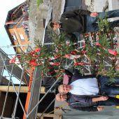 Firstbaum für Alpenstern-Projekt