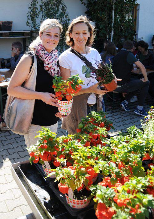 Kräuter, Blüten und Sträucher in großer Auswahl.
