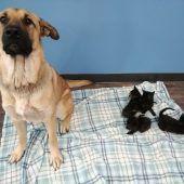 Streunende Hündin rettet Katzenbabys vor dem Erfrieren