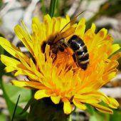 Imker suchen Bienenfans