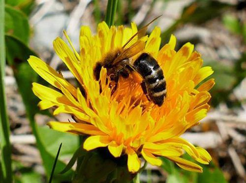 Bei der Ausbildung lernen Interessierte alles rund um die Biene. VIV