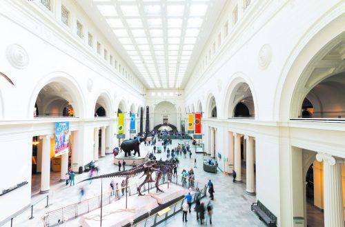 Der besterhaltene Tyrannosaurus Rex der Welt ist im Field Museum of Natural History zu Hause. Shutterstock (5)