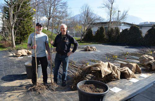 Der Obst- und Gartenbauverein hilft bei der Aktion der Stadt Dornbirn fleißig mit. Stadt