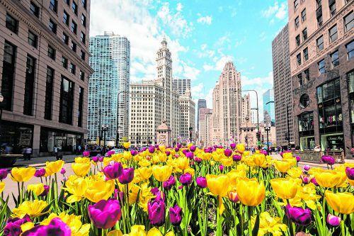 Die Michigan Avenue im Zentrum Chicagos hat viel zu bieten.