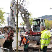 100 neue Bäume für die Stadt Dornbirn