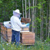 Faszinierendes Leben im Bienenstock