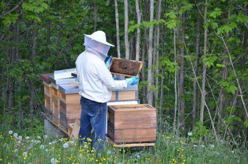Die Mitglieder des Bienenzuchtvereins kommen aus Schnepfau, Au, Schoppernau, Schröcken und Damüls. mam