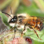 Einsatz für die Bienen auch im Winter