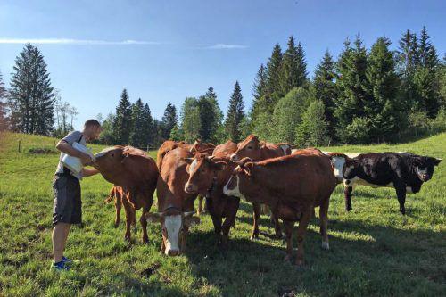 Die Veranstaltung am 21. November in Hittisau soll das Bewusstsein für regional erzeugte Lebensmittel wecken. mo