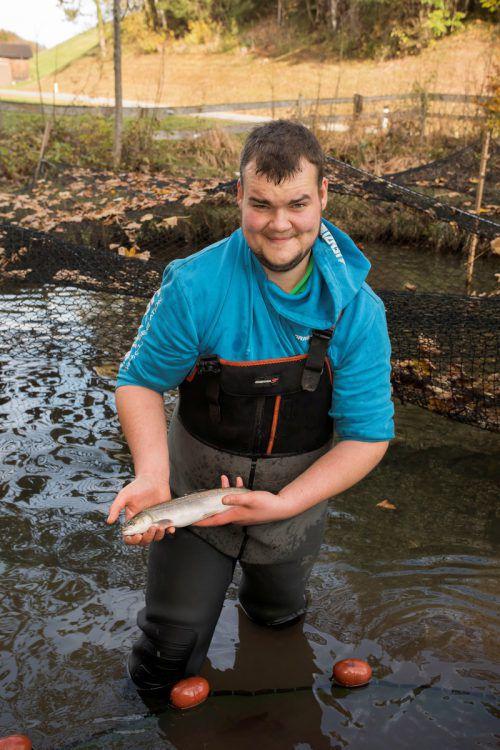 Dreimal in der Woche holt Nino Mayer in seinem Teich Fischnachschub. Nach dem Schlachten geht's direkt zu den Kunden. VN/Paulitsch