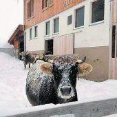 Der Winter gibt heuer in Lech und Zürs am Arlberg ein erstes Lebenszeichen. A7