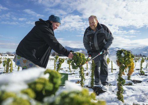 Die Gärtner wissen Bescheid darüber, wie man im Winter Gemüse anbaut.Dietmar Denger /Vorarlberg Tourismus