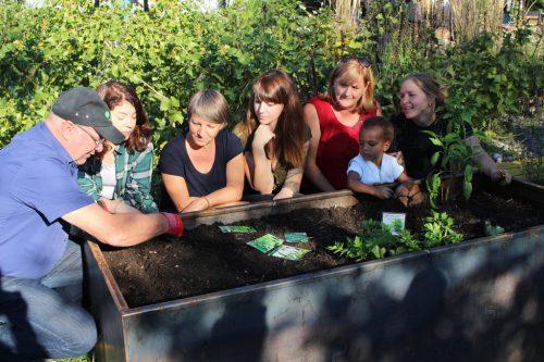 """Essbares Lauterach – gemeinsam Gärtnern, Genießen und dabei Natur hautnah erleben ist eines der Projekte von """"Auf gesunde Nachbarschaft"""". STRAUSS"""