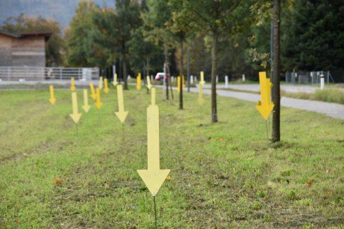 Große gelbe Pfeile markieren in der Appenzeller und der Schweizer Straße jene Stellen, an denen achtlos Müll weggeworfen wurde.Marktgemeinde