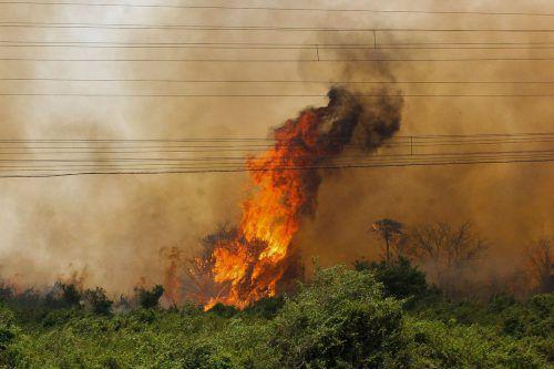 Im größten Sumpfgebiet der Welt lodern die schlimmsten Brände seit Jahren. AFP