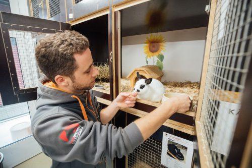 Im Tierheim herrscht gerade Hochbetrieb. Marco Milohnic kümmert sich seit 13 Jahren um das Wohl seiner Schützlinge. VN/Sams