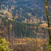 Wald unter Druck
