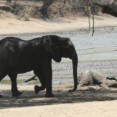 Dürre bedroht Wildtiere