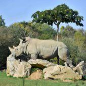 Weltweit ältestes Nashorn gestorben