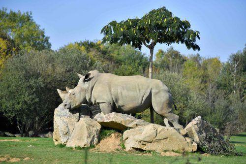 Nashorn-Weibchen Sana wurde 55 Jahre alt. AFP