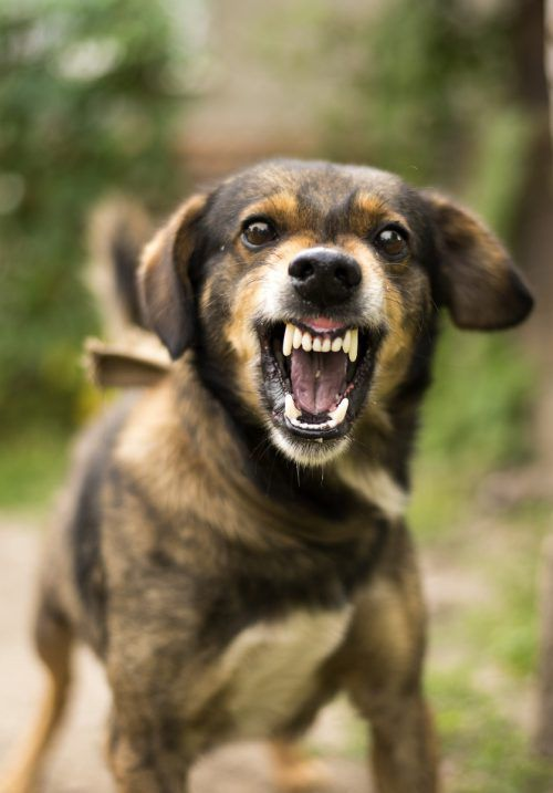 Nicht nur Hunde griffen die wehrhafte Pensionistin an, sondern anschließend auch die erzürnte Besitzerin der Vierbeiner. symbol