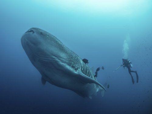Was den Großen der Meere in den Schlund strömt, können sie nicht bestimmen. AP