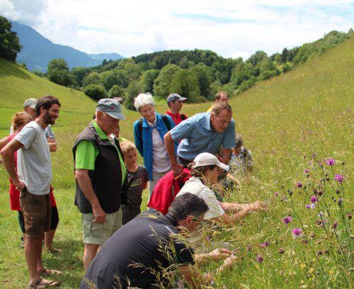 Was kann jeder Einzelne für die Erhaltung und Stärkung der Biodiversität tun? Auch dieser Frage wird beim Themen-abend nachgegangen.bodenseeakademie/bianca burtscher