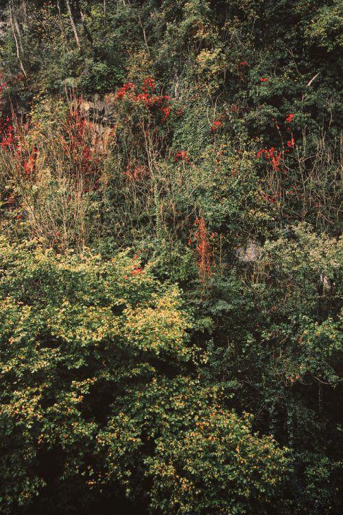 Barbara Bühler ist mit zwei Aufnahmen aus der Natur vertreten.