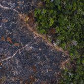 Vernichtung des Regenwalds in Brasilien mehr als verdoppelt
