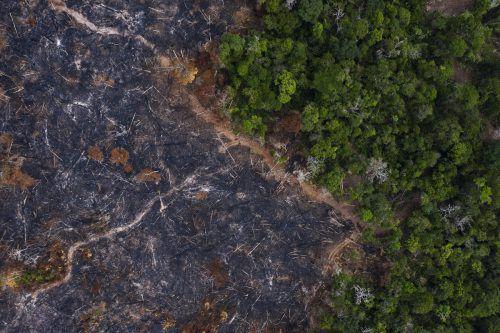 Bis November dieses Jahres wurden 8974 Quadratkilometer Wald vernichtet. AFP