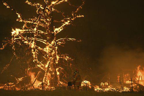 Bisher haben die Brände acht Menschen das Leben gekostet. AP