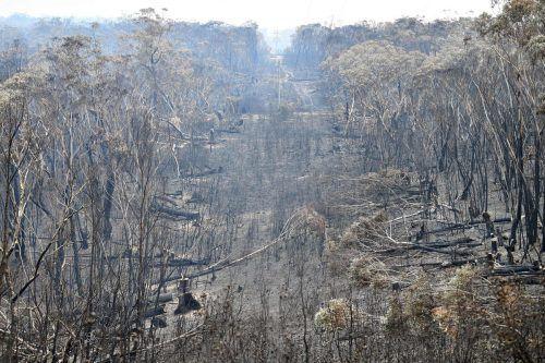 Die Buschbrände in Australien haben rund 2,7 Millionen Hektar Land vernichtet. AFP