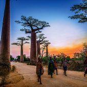 Allee der Baobabs bei Morondava