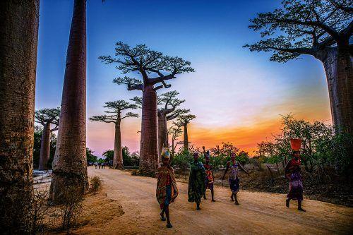Die natürliche Allee der riesigen Affenbrotbäume bietet viele tolle Fotomotive.