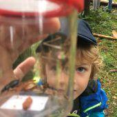 Erfreuliche erste Bilanz für Naturprogramm Vielfalter Schulen