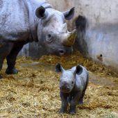 Bonjour Baby-Rhino