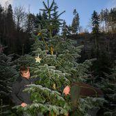 Heimische Christbäume für Klimaschutz