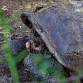 Diesel-Leck bedroht Tiere und Natur der Galapagos-Inseln