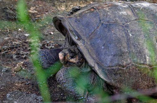 In der Nähe der Unglücksstelle leben Meeresschildkröten. AFP