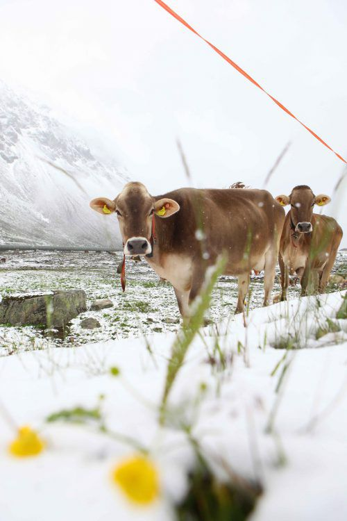 Österreich emittiert rund 79 Millionen Tonnen CO2.VN/HB