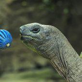 Riesenschildkröten sind lernfähig und haben langes Gedächtnis