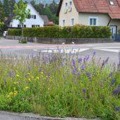 Rankler Naturvielfalt in Europa vorne dabei