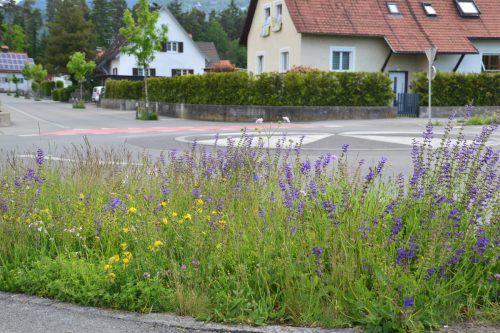 Seit 2010 wird in Rankweil bei der Gestaltung von Freiflächen und Straßenrändern auf naturnahe Bepflanzung geachtet. rankweil