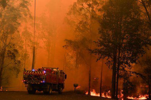 Seit Wochen halten Buschbrände die Feuerwehr in Atem. Reuters